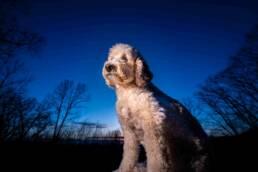 La Crosse Pet Photography